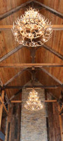 Large whitetail chandelier
